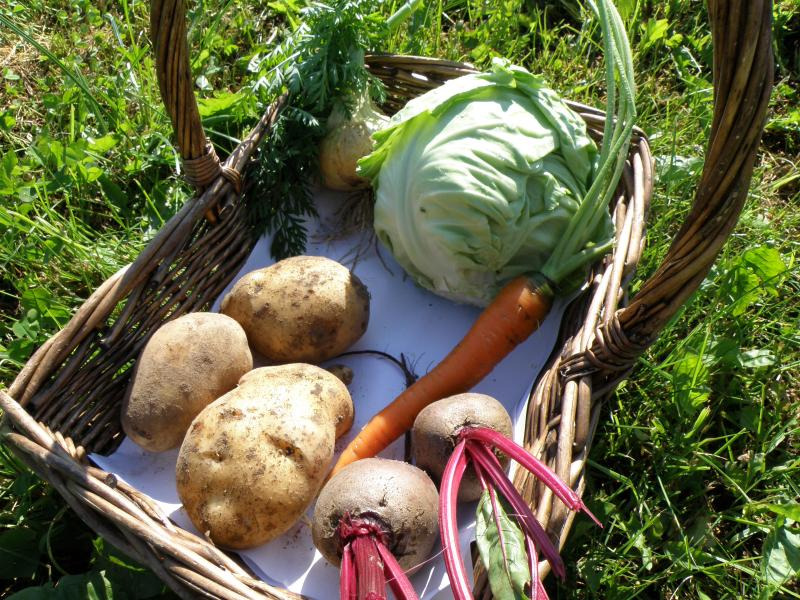 Овощи для борща с огорода