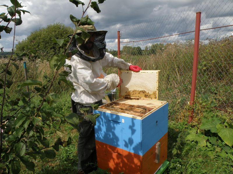 Наш первый мёд