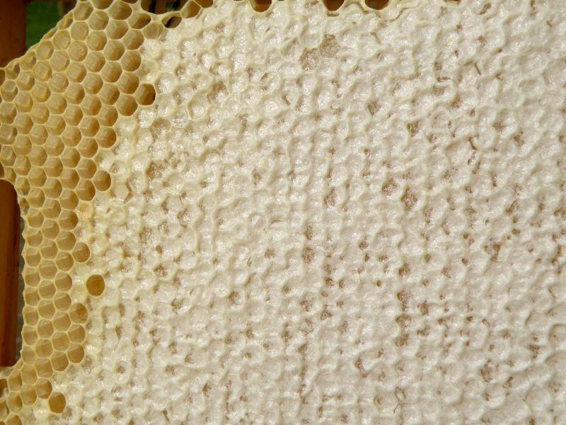 Наш первый мёд - соты